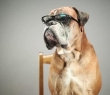 Mi smo DOG FRIENDLY optika!